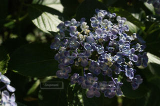 近くの緑の植物をの写真・画像素材[1249422]