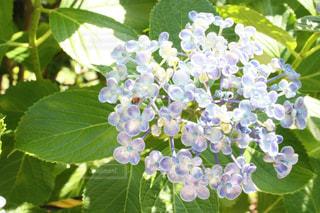 近くの緑の植物をの写真・画像素材[1249425]