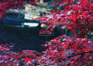 近くの木のアップの写真・画像素材[1606906]