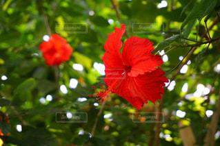 花の写真・画像素材[215016]