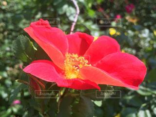 自然の写真・画像素材[209979]