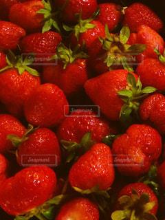 食べ物の写真・画像素材[209994]