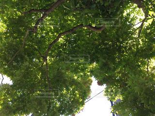 屋外の写真・画像素材[522572]