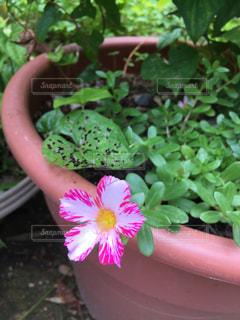 花の写真・画像素材[589242]