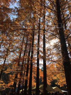 自然の写真・画像素材[211505]