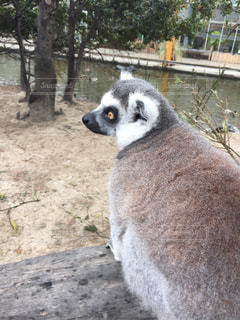 動物の写真・画像素材[211554]