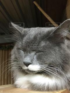 猫 - No.211556