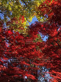 木のクローズアップの写真・画像素材[4717234]