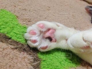 猫の肉球の写真・画像素材[4782745]