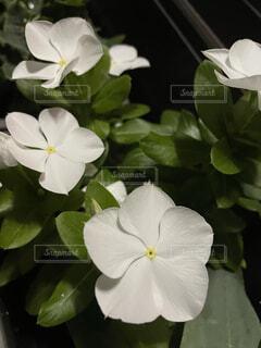 植物の花瓶の写真・画像素材[4731823]