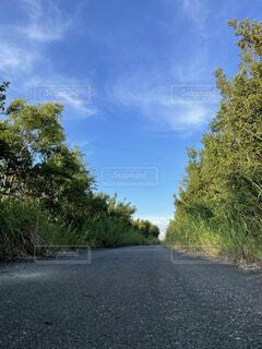 道路の脇にある木の写真・画像素材[4741926]