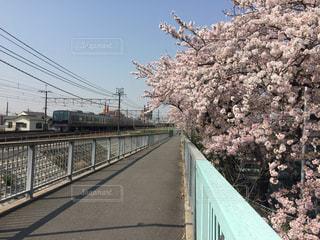花見 - No.431529