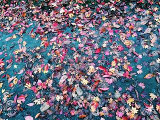 秋の写真・画像素材[220959]