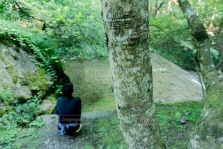 フォレスト内のツリー - No.720605