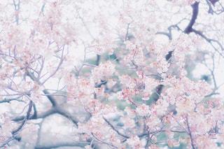 近くの春の写真・画像素材[1022900]