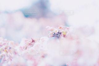 近くの花のアップの写真・画像素材[1065670]