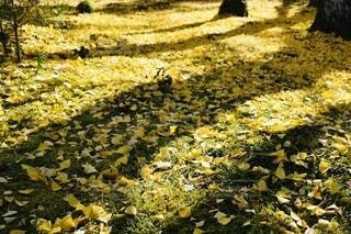 黄色の絨毯の写真・画像素材[4953817]