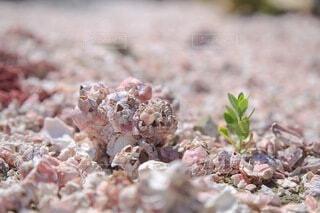貝殻の中に葉っぱが咲いてたの写真・画像素材[4770808]