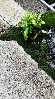 岩と苔の写真・画像素材[4813767]