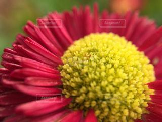 自然の写真・画像素材[211325]
