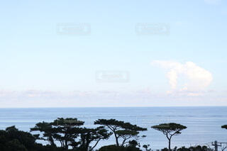 松林と海の写真・画像素材[4782576]