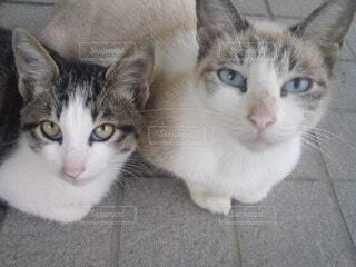 カメラを見つめる猫の親子の写真・画像素材[4844301]