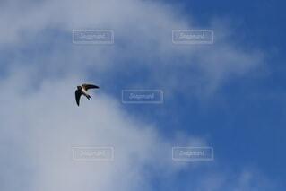 つばめが飛ぶ青い空の写真・画像素材[4923452]