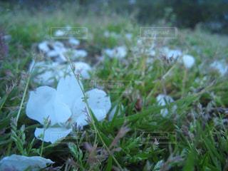 冬 凛の写真・画像素材[210711]