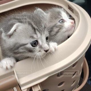 かごの中に座っている猫の写真・画像素材[4727721]