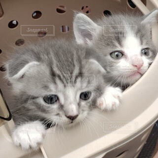 流しの隣に座っている猫の写真・画像素材[4727720]