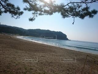 砂浜と松の写真・画像素材[4769371]
