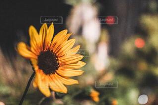 花の写真・画像素材[4773730]