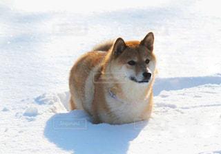 犬 - No.211125
