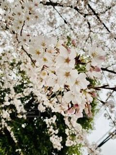 春の終わりの写真・画像素材[4733677]