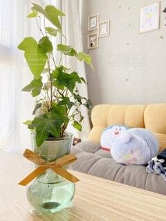 生活感が出ててすみませんw私の唯一育ててる植物です。の写真・画像素材[4743631]