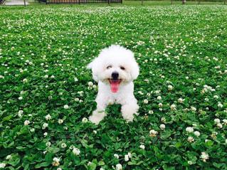 犬の写真・画像素材[211044]