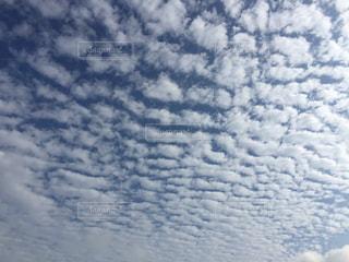 いわし雲の写真・画像素材[211149]