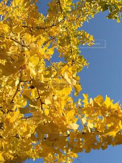 秋の写真・画像素材[224891]
