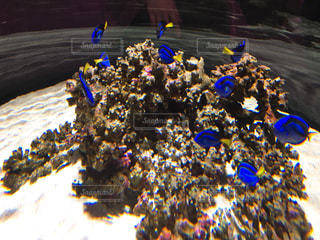 No.212890 サンゴ