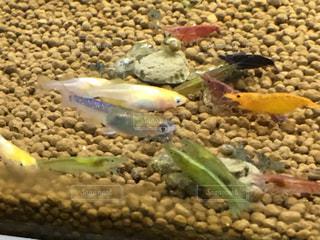 魚の写真・画像素材[212696]