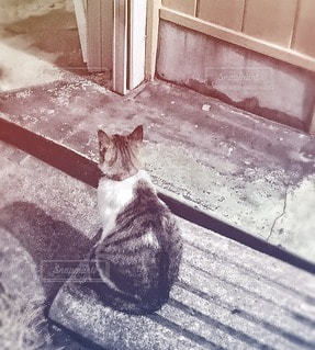 猫 - No.30223