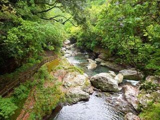 中津渓谷の写真・画像素材[4746665]