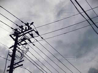 電線に止まったカラスの写真・画像素材[4827591]