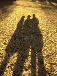 散り積もった銀杏の葉に映る3人の影の写真・画像素材[4769604]