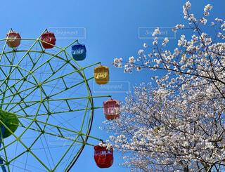 カラフルな観覧車と満開の桜の写真・画像素材[4772123]