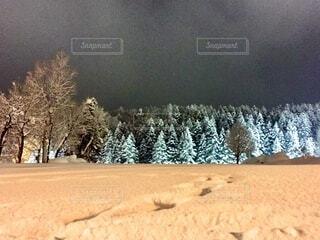冬のニセコで立ち並ぶもみの木の霧氷の写真・画像素材[4774513]