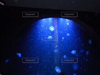 光の中のクラゲの写真・画像素材[4748672]