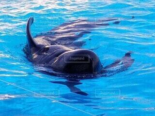 クジラの写真・画像素材[4751663]