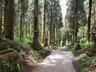 森の中の木の写真・画像素材[4755712]