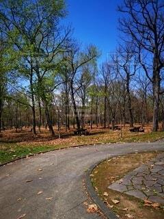 公園の中の散歩道の写真・画像素材[4754552]
